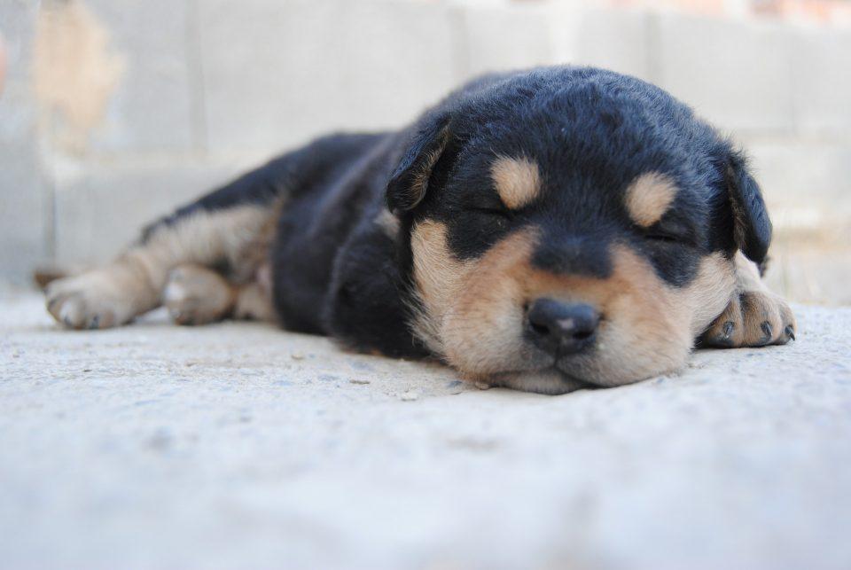 dormando schlafen