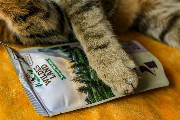 Wildes Land - Katzen sind gut für Kinder, Kinder, Haustiere, Kinder wachsen mit Haustieren auf, Katze